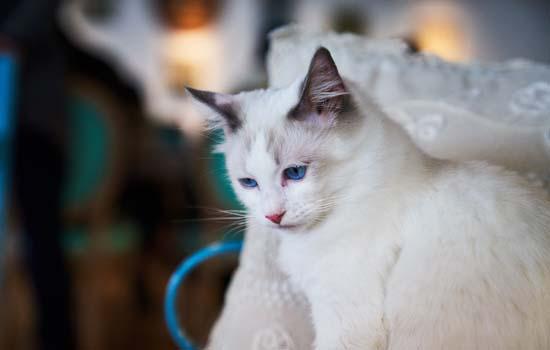 加菲猫总是喜欢咬人怎么办