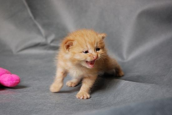 怎么训练猫咪在窝里睡觉 训练猫咪宠物窝睡觉方法