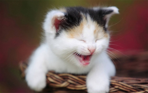 如何给猫护理口腔 猫咪刷牙视频教程