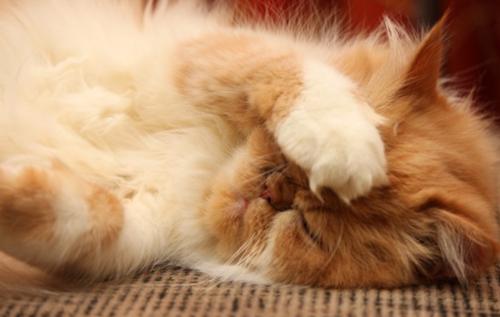 波斯猫拉肚子怎么办,波斯猫拉肚子原因