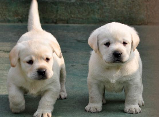 狗狗可以吃豆腐吗?