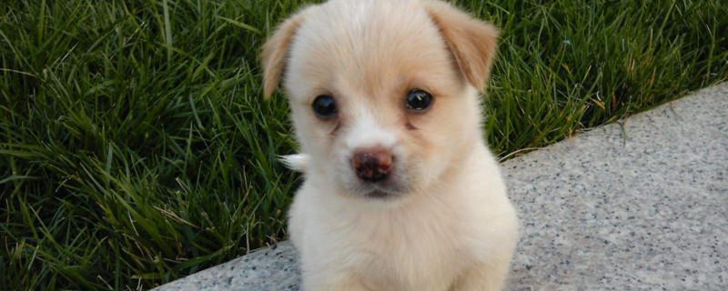 幼犬一天需要喂几次奶粉