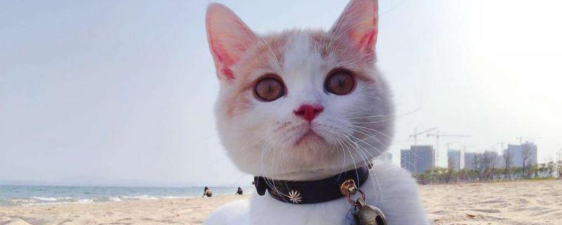 猫咪不能吃什么食物