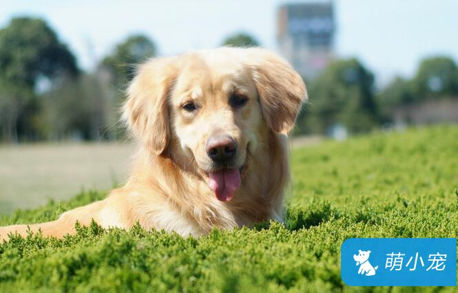 怎么判断狗狗是否健康?