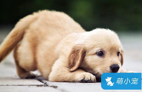 狗狗身上有虫子怎么办