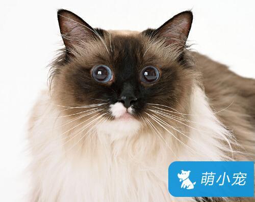 宠物猫怎么挑选,挑选猫咪的要点