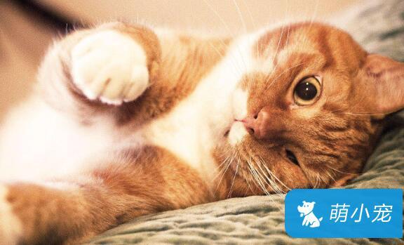 猫咪怀孕有哪些症状?