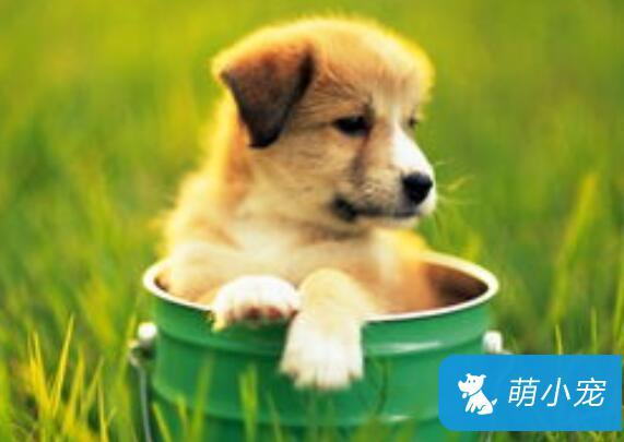 狗狗身上常见的寄生虫有哪些