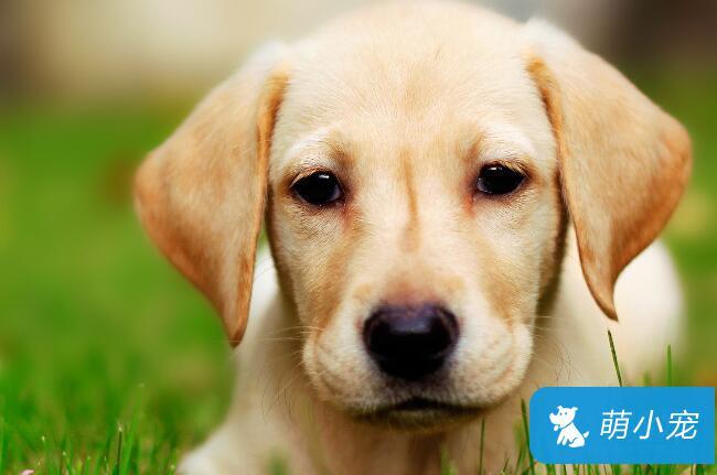 怎样预防狗狗身上的寄生虫