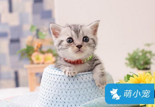 猫粮太硬怎么办?用奶水泡软